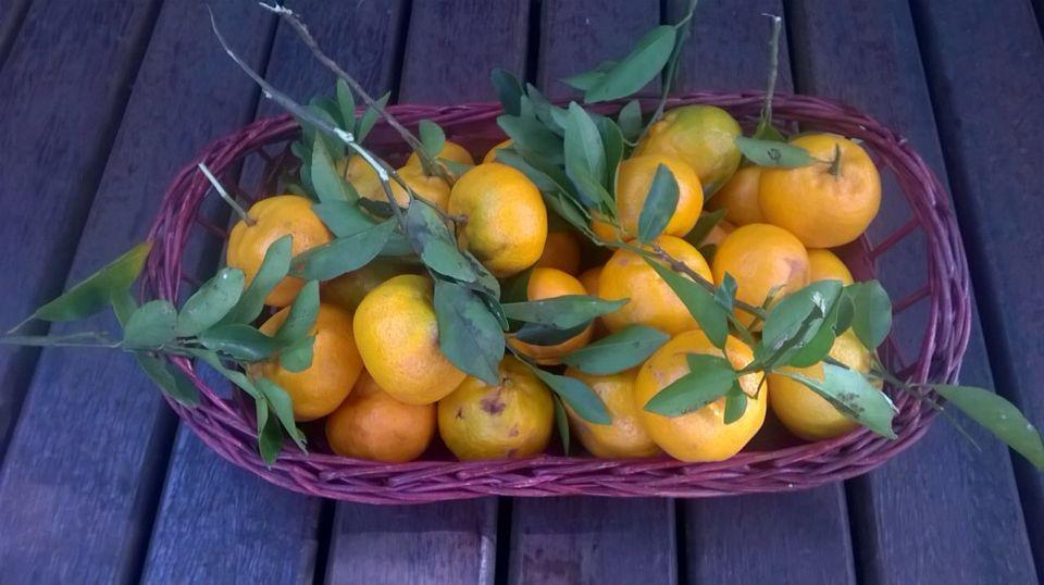 Mexericas/bergamotas/mimosas