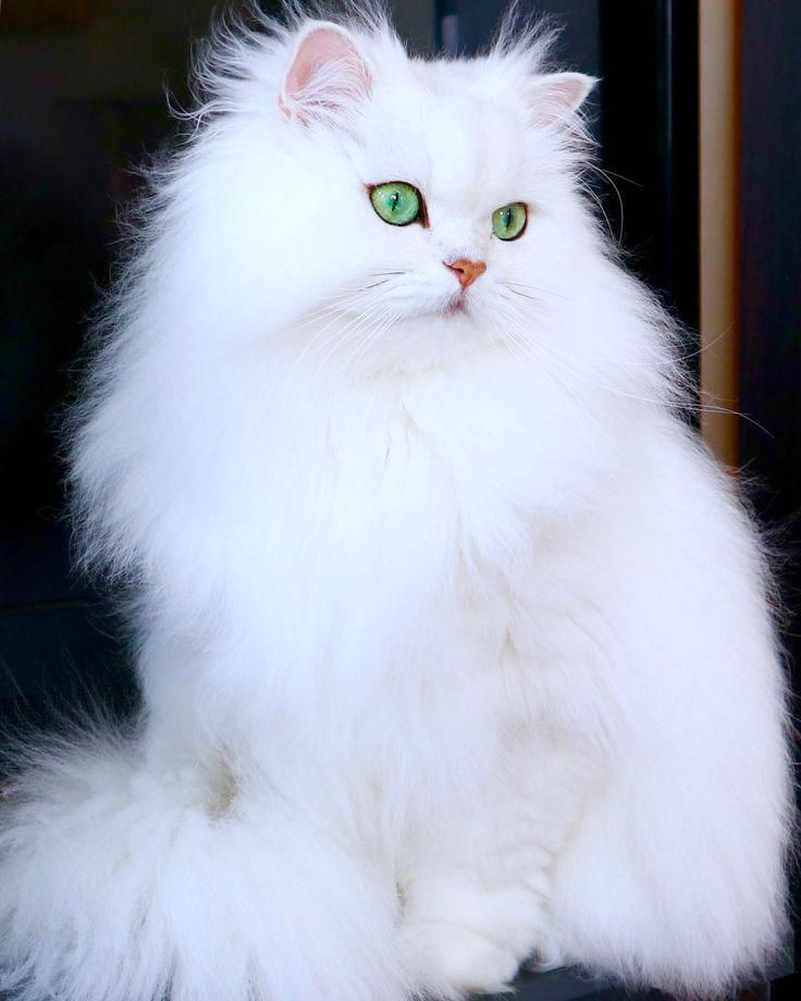 Awesome Cats And Kittens Tips Are Available On Our Internet Site Take A Look And You Will Not Be Sorry You Did Catsandk Pretty Cats Cute Cats Beautiful Cats