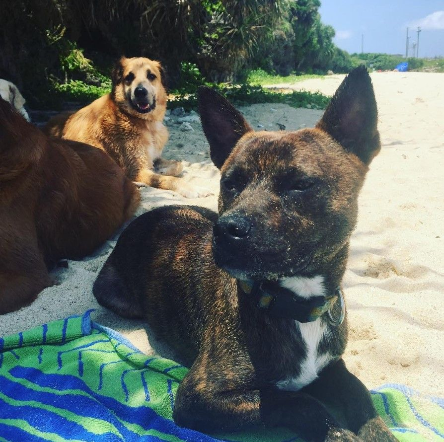 44 Dogs Mixed With Boston Terriers