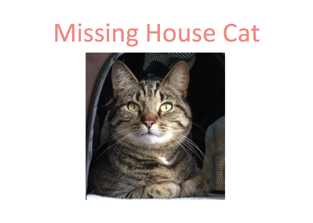 My Cat is missing! How to get your lost cat to come home