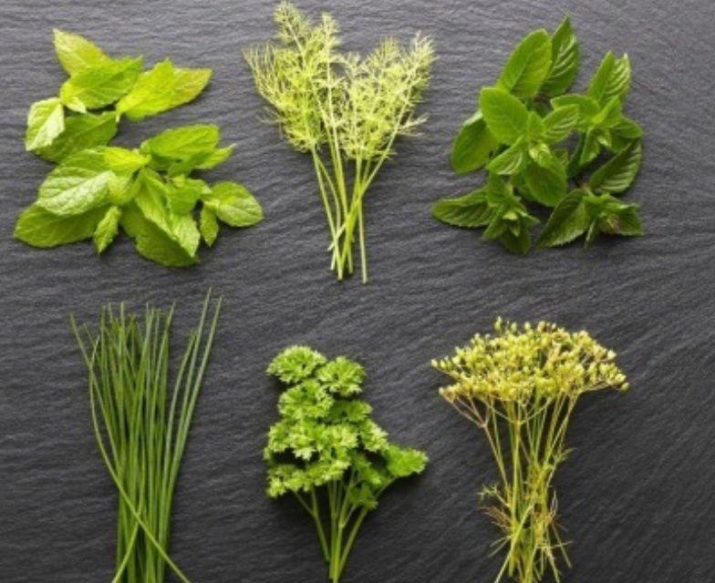 Fresh Herbs Vitamins To Stay In Shape Https Ift Tt 3mti9g1 Herbs Fresh Herbs Herb Sauce