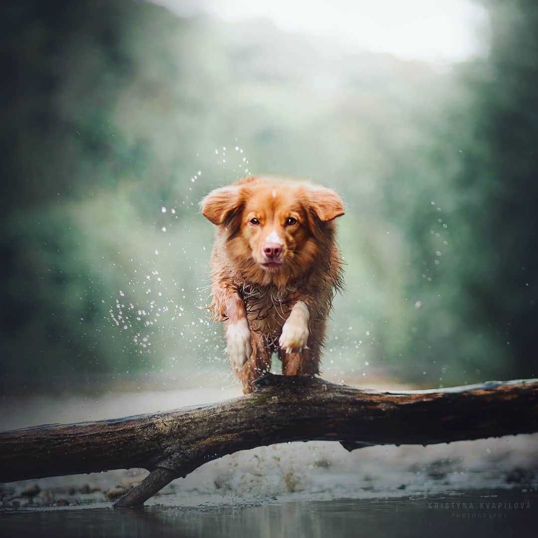 Beautiful and Magical Portraits of Dogs by Kristýna Kvapilová #dogsphotography