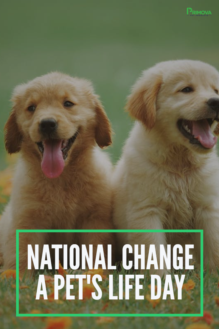 Today We Re Celebrating National Change A Pet S Life Day So Hang Out This Day With Your Pet Or Take This C In 2020 New Puppy Checklist Puppy Checklist New Puppy