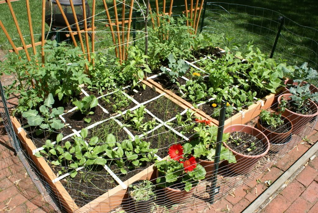 Square Foot Gardening ~ I wanna try this...