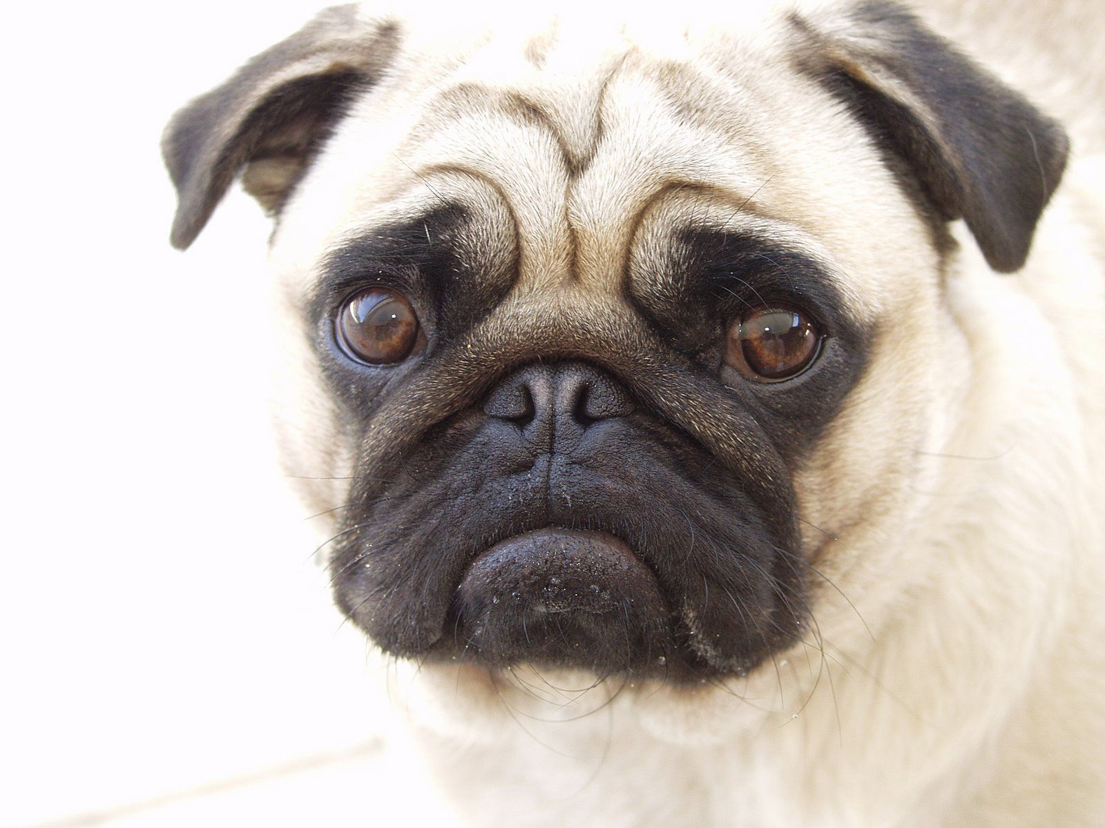 Are Dog Vitamins Really Necessary Http Puppyexpressions Tumblr