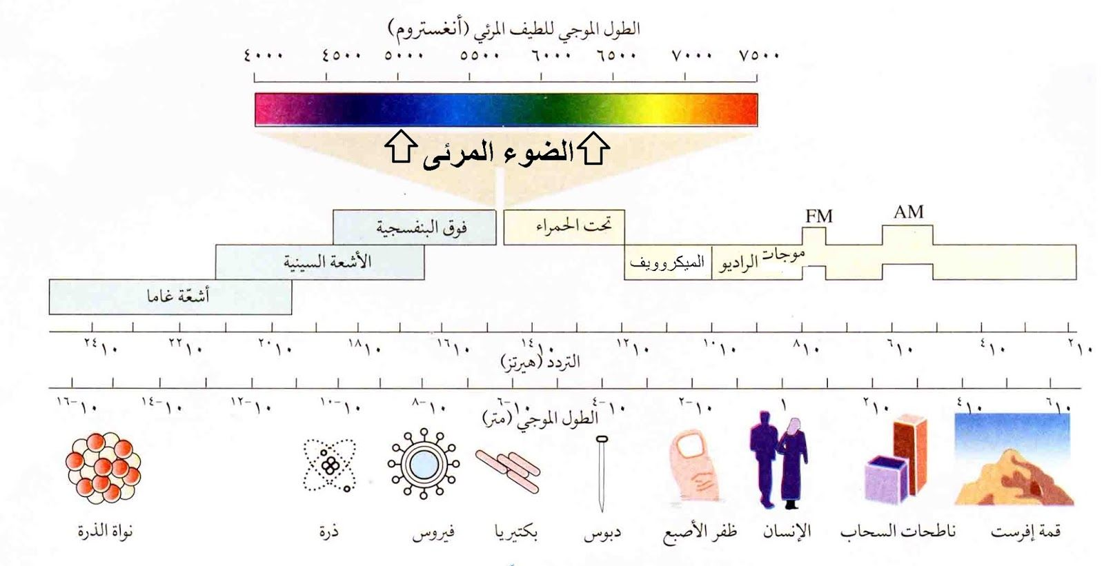 Pin By Mazin On Knowledge Information معرفة و معلومات Periodic Table 10 Things