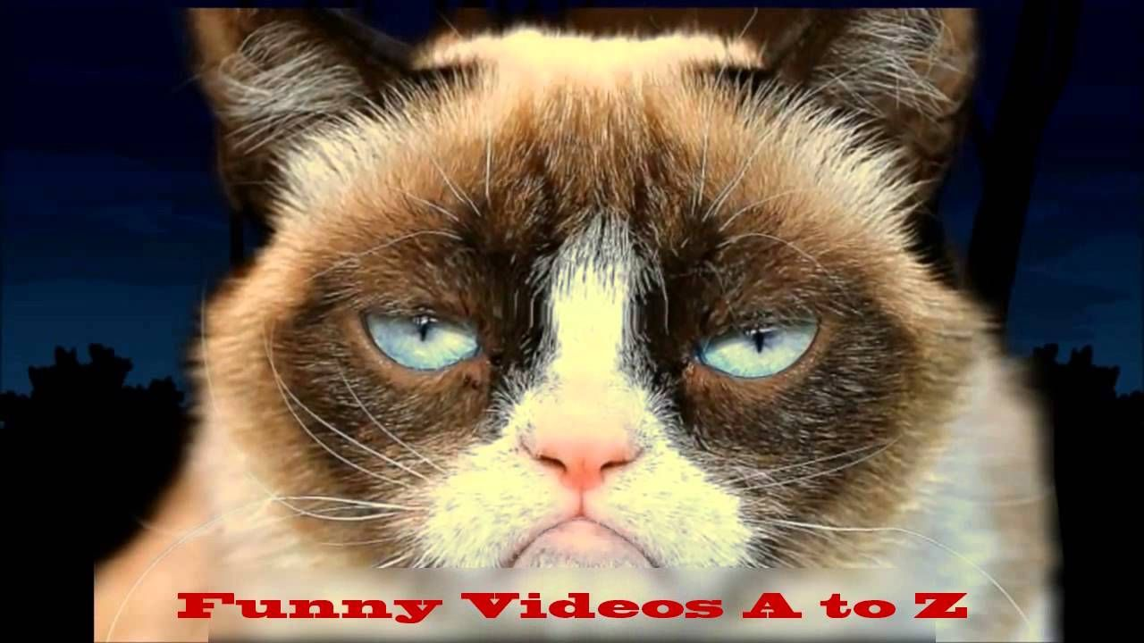 Starring Uggie Woofy Birthday Ecard From American Greetings Youtube
