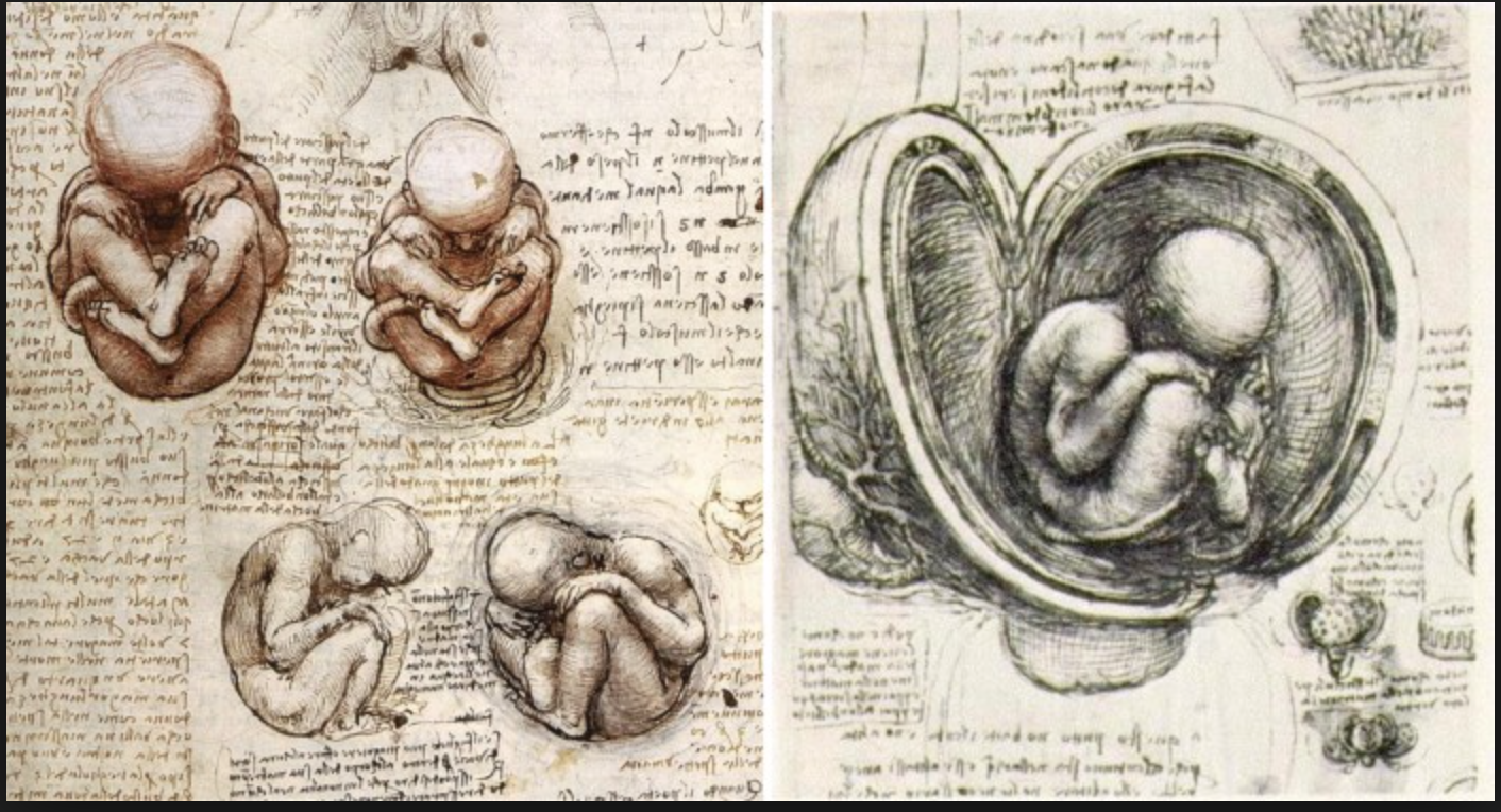 FATHER OF EMBRYOLOGY – Leonardo Da Vinci Facts | Leonardo da Vinci ...