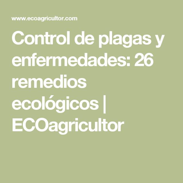 Control de plagas y enfermedades: 26 remedios ecológicos   ECOagricultor
