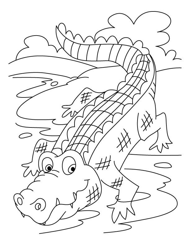 Free Printable Crocodile Coloring Pages For Kids Zoo Coloring Pages Animal Coloring Pages Cartoon Coloring Pages