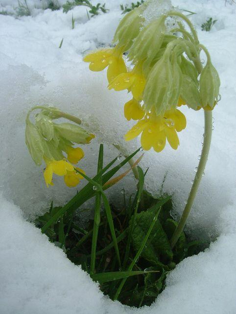 Spring flowers london pinterest flowers spring and plants spring flowers london mightylinksfo