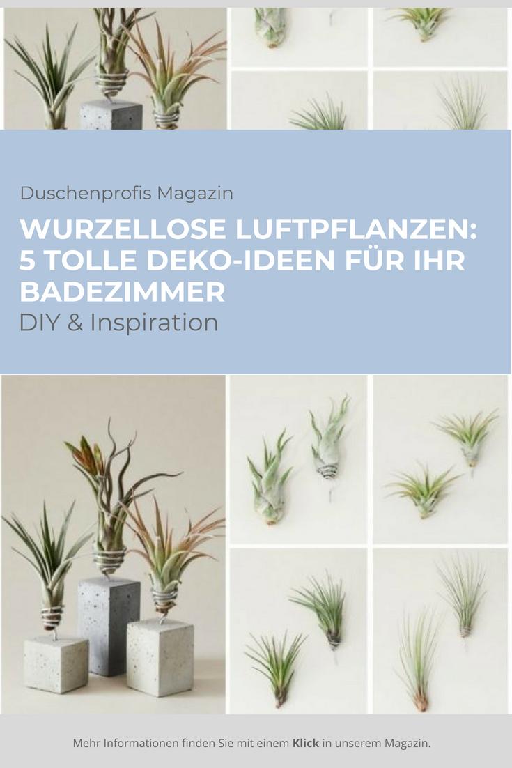 Tillandsie: die Luftpflanze ohne Wurzel als Badezimmerdeko