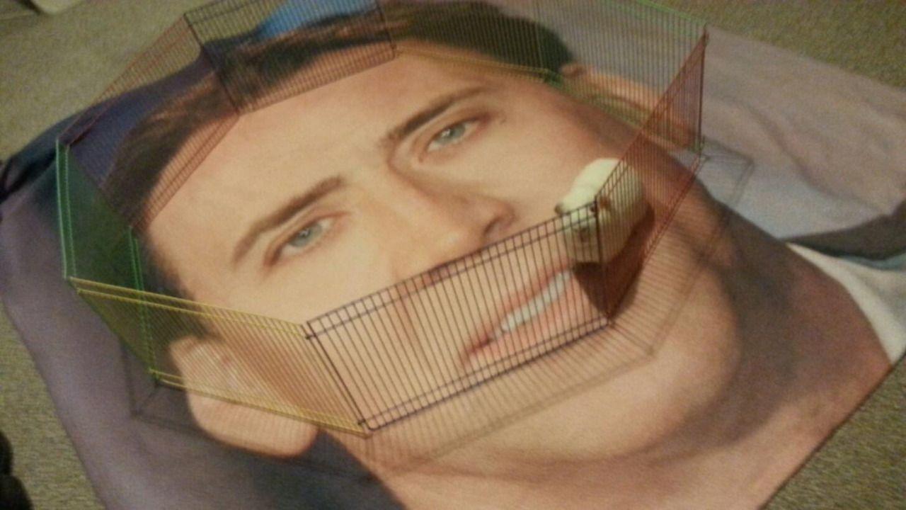 """freddieboychilton: """" it a nicholas cage """""""