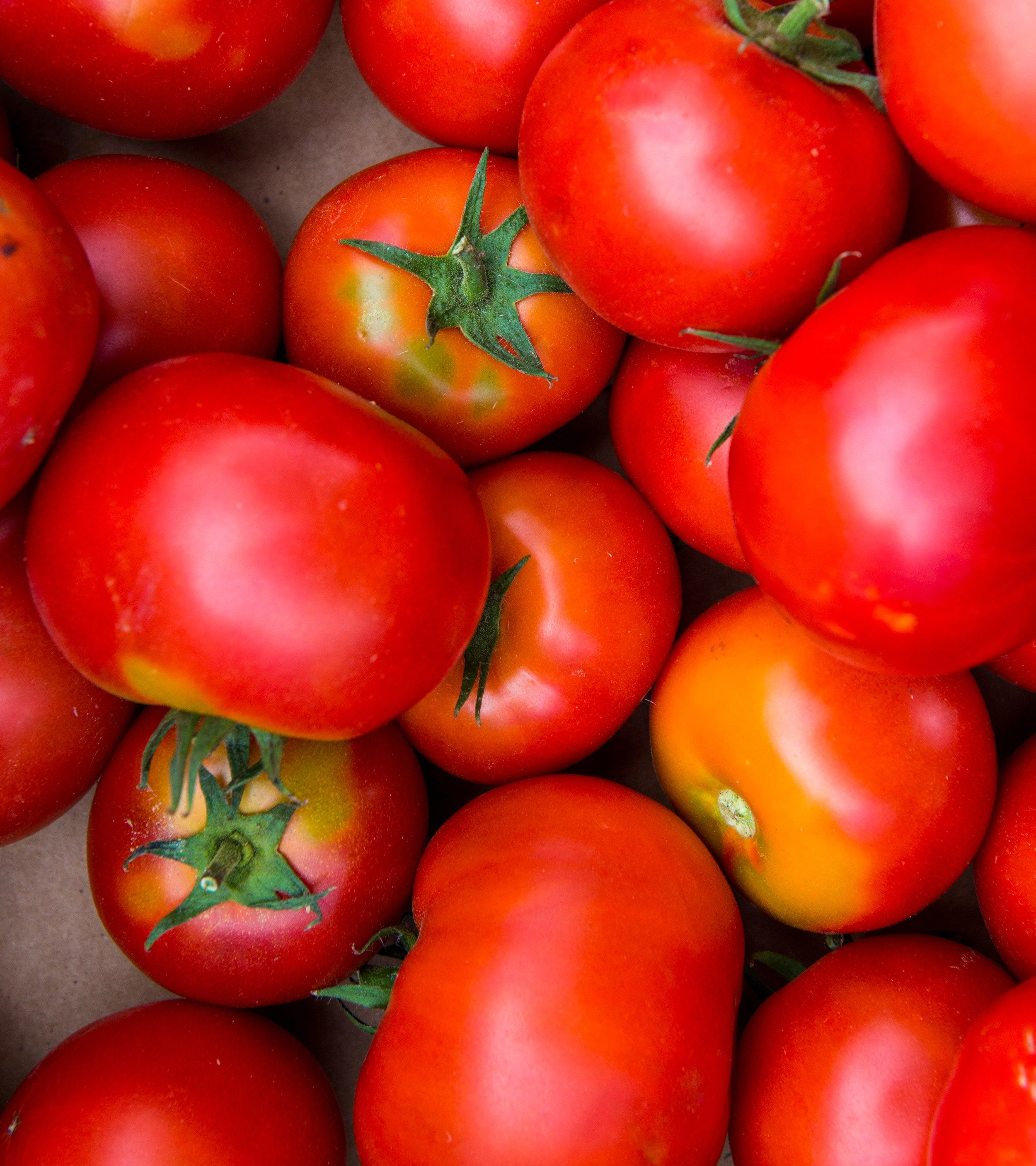Tomato Lovers: Grow The Best By Recognizing And Solving
