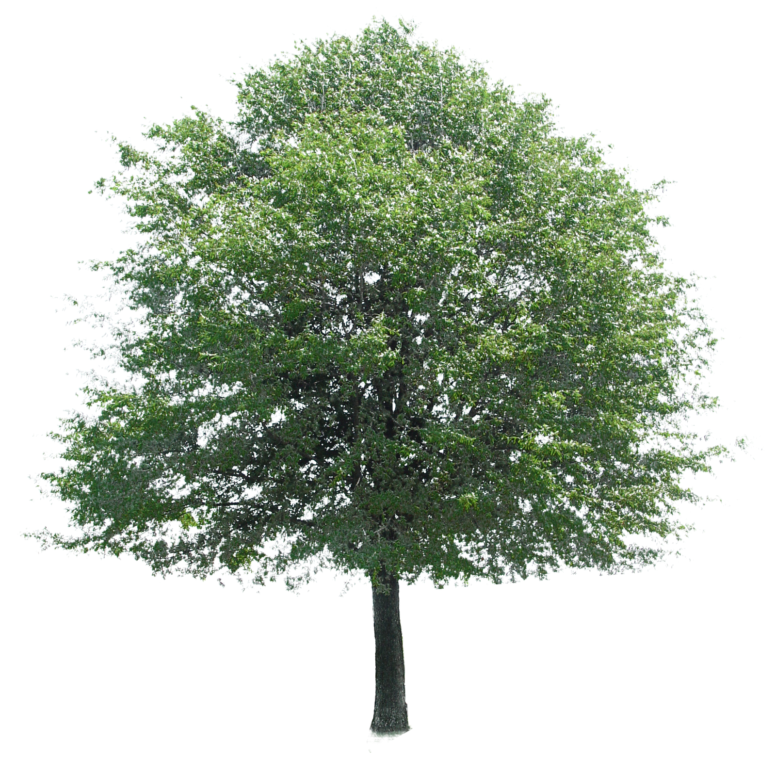 Tree 3D Models for Download | TurboSquid