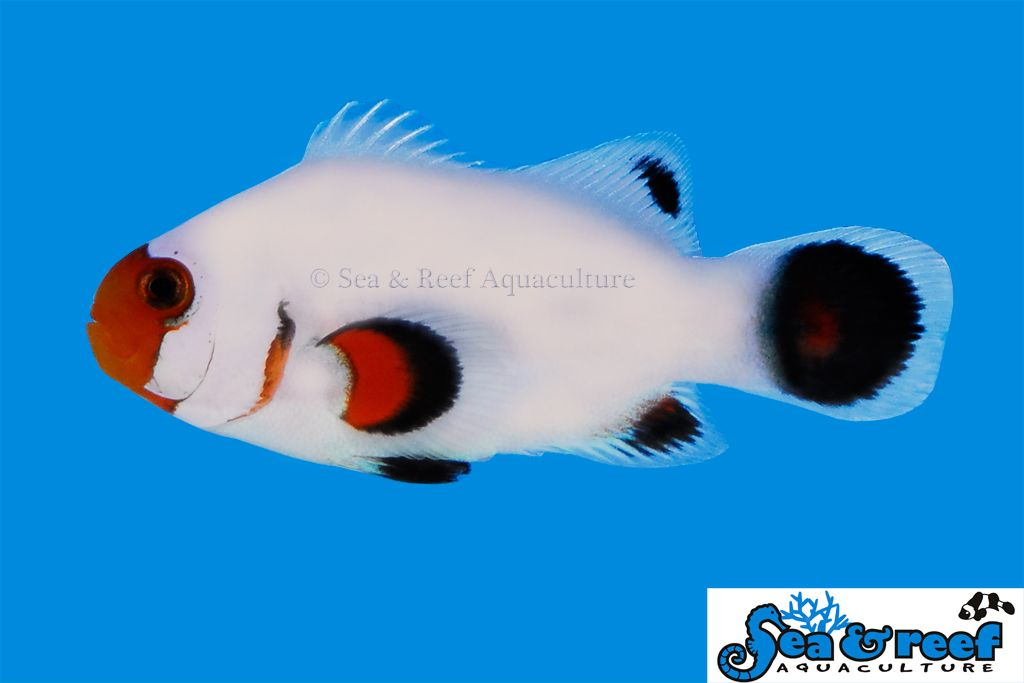 Specializing In Sps Corals And Clams 916 514 0203 Peixes Mundo Animal