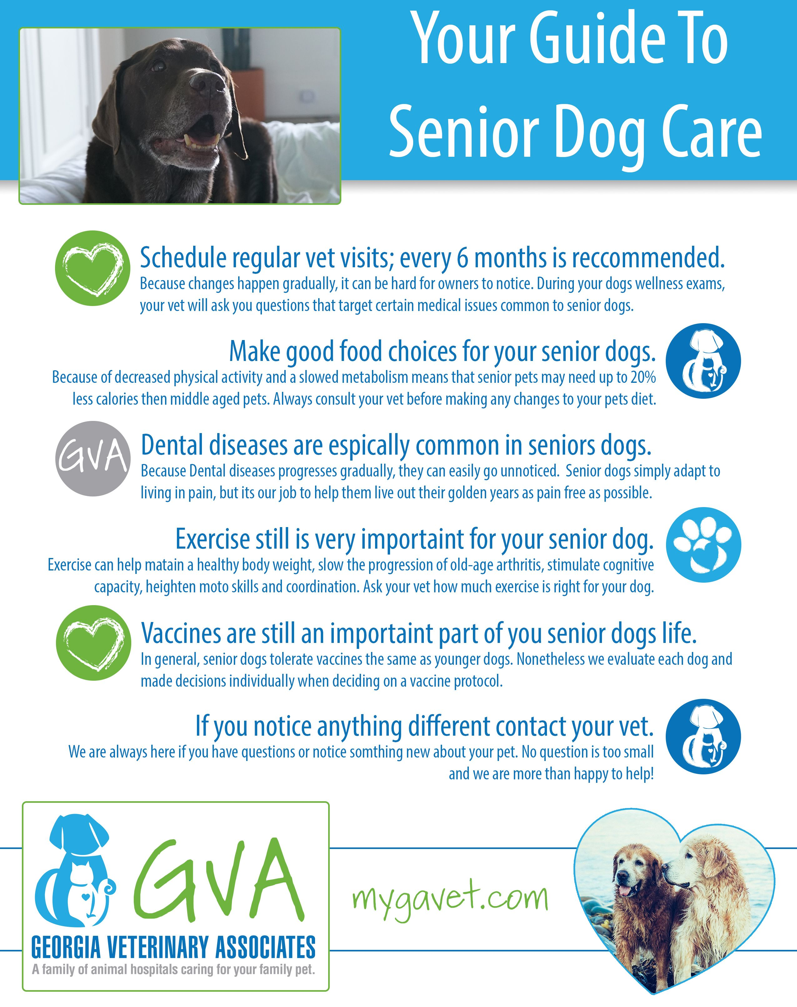 Your Guide To Senior Dog Care Senior Dogs Care Dog Care Senior Dog