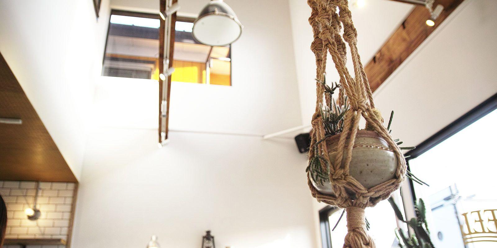 多肉植物 x 渡邉由紀さんの鉢商品一覧 | 多肉植物とサボテン販売 solxsol