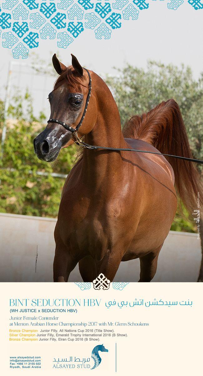 إلى مربط تميم @tamim_stud   Arabian Horses News   Pinterest   Horse