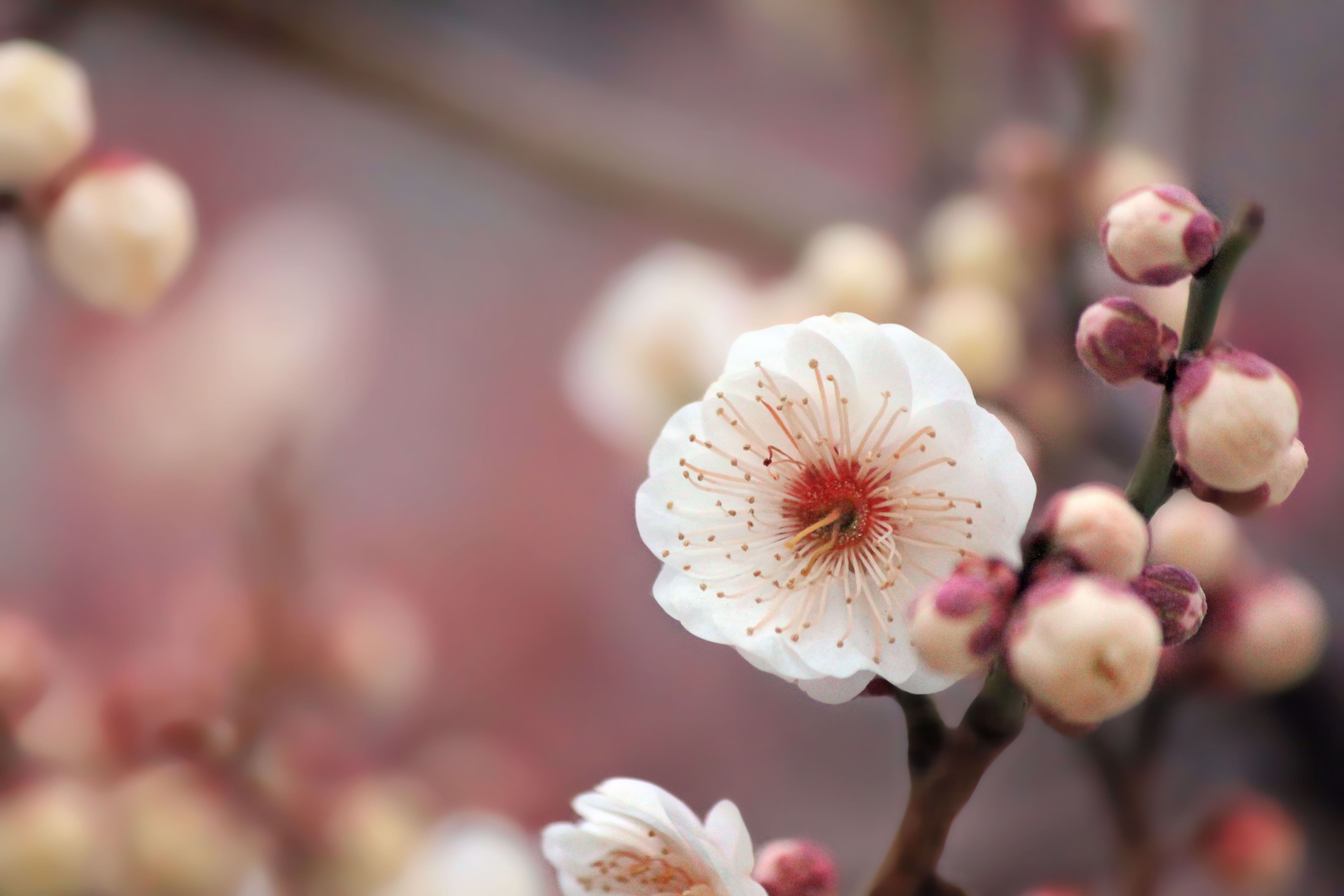 Macro Photography Of White Cherry Blossom Flower To Use Texture Background M In 2020 Macro Photography Flowers Macro Photography Nature Flowers Photography Beautiful