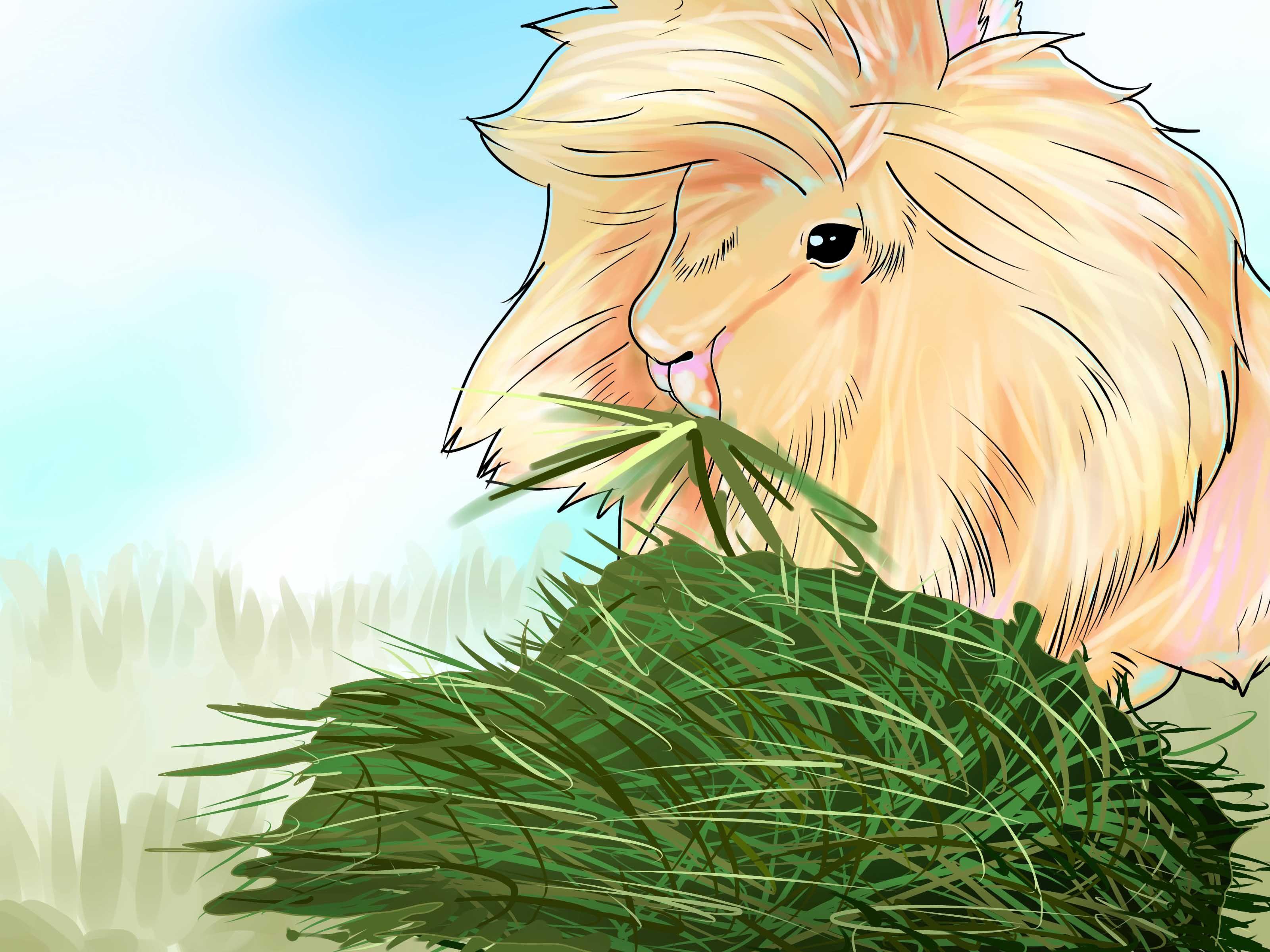 Care for lionhead rabbits lionhead rabbit bunny care