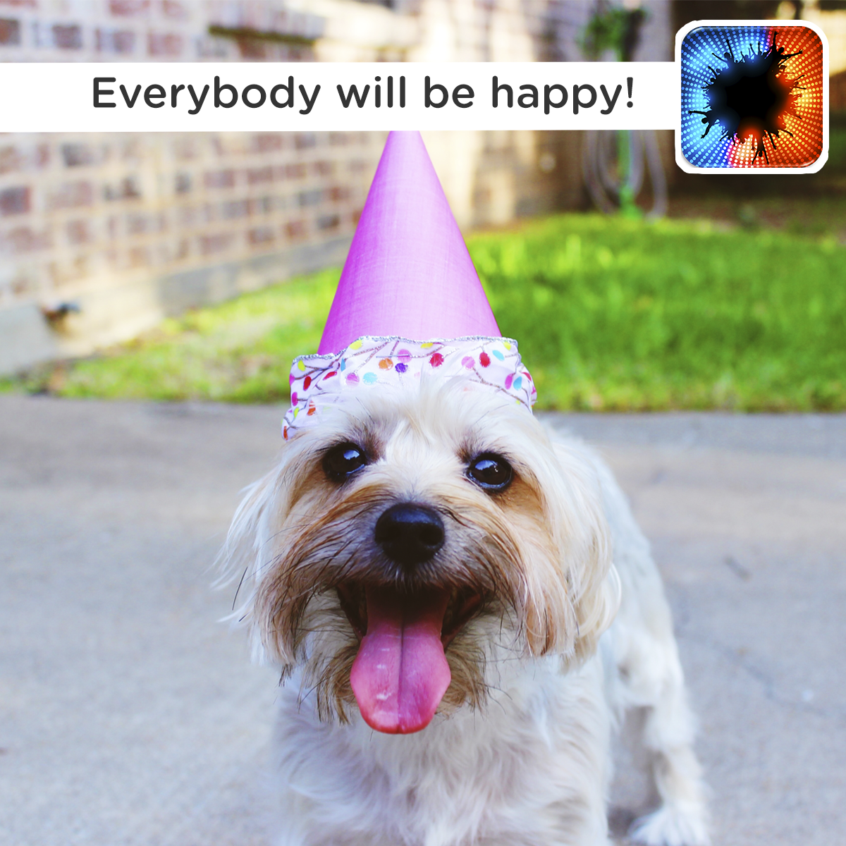 Happy Birthday Funny Dog Ecard Today Is My