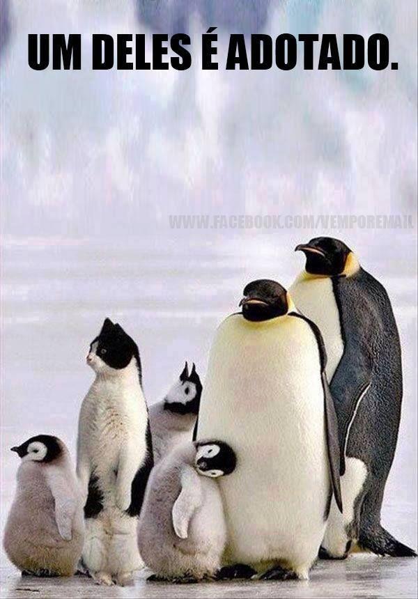 Imagem de Funny! por Silvana Chaves Memes de animais