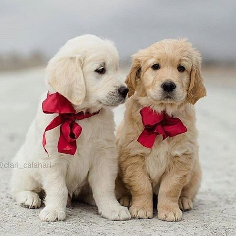 You Look Really Nice Cute Puppies Puppies