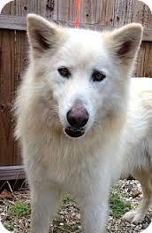 Alaskan Malamute German Shepherd Mix Google Search Cute Dogs