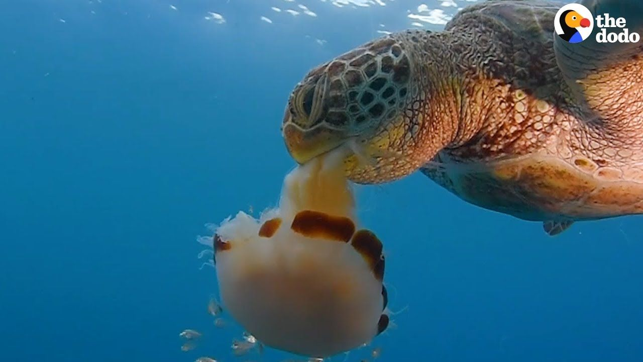 How To Save A Sea Turtle S Life The Dodo You Go Green And Clean Pinterest