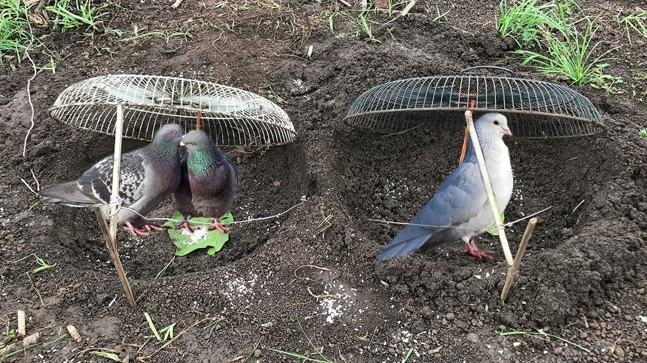 Awesome Quick Bird Trap Using Two Old Fans - How To Make Bird Trap ...