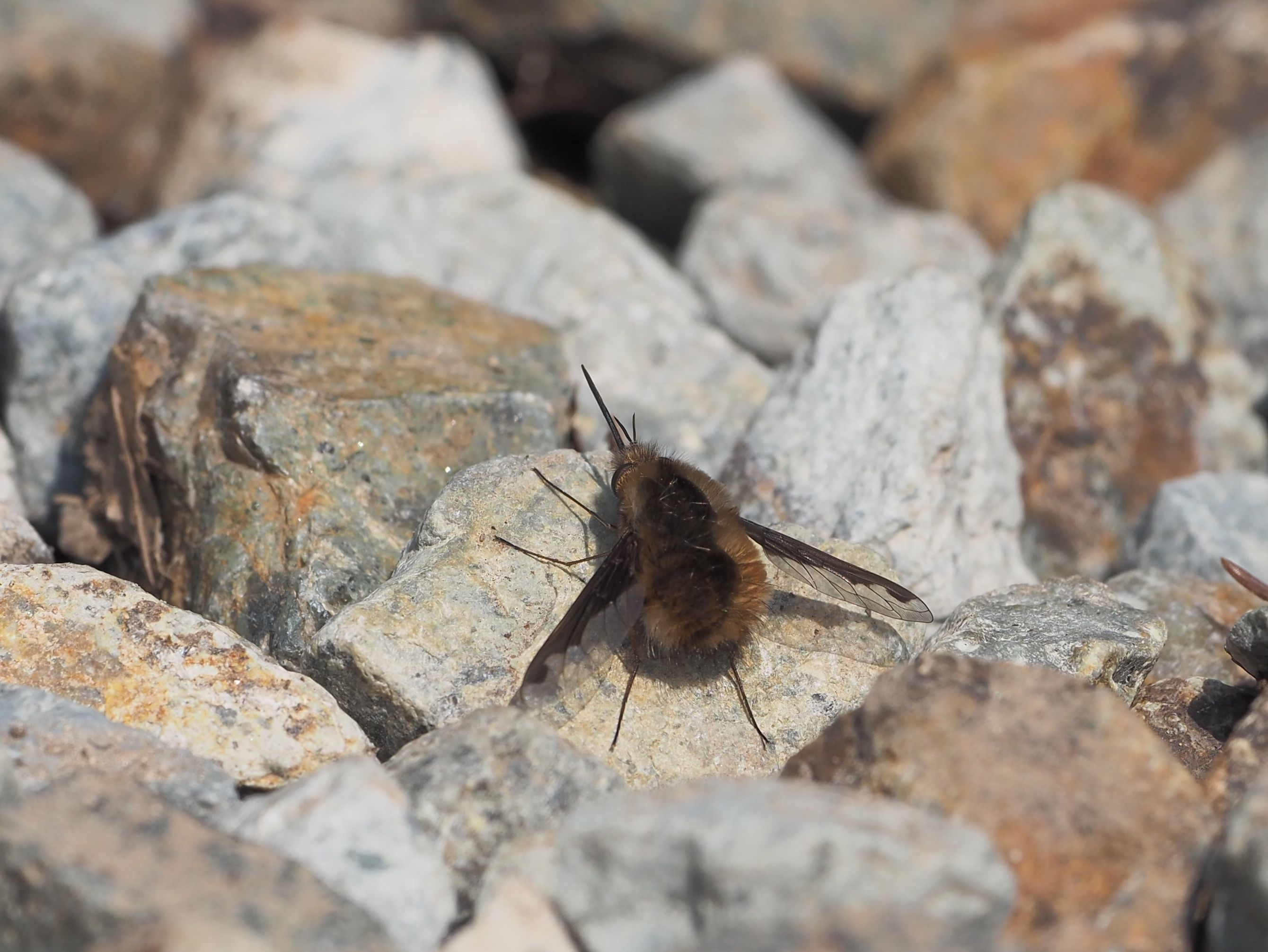 ボード Nature 鳥虫giga のピン