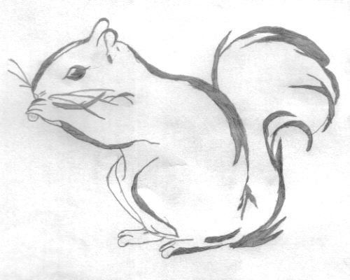 a cool squirrel drawing