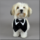 Since my dog will be standing up in my wedding he'll definitely need one of these! I'd prefer a tiny tux jacket for him though :)