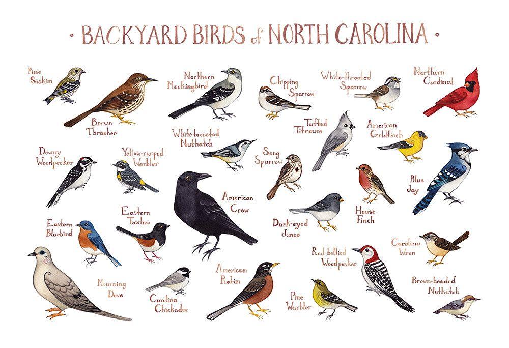 Backyard Birds Of North Carolina - BACKYARD HOME