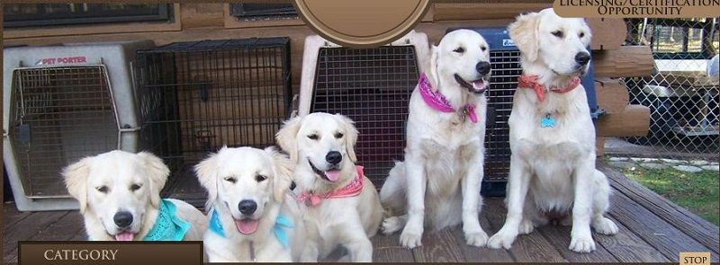 Northern Virginia Dog Trainers From Off Leash K9 Teach Your Dog To Behave With Obedience Dog Training In Dog Trainer Dog Training Obedience Best Dog Training