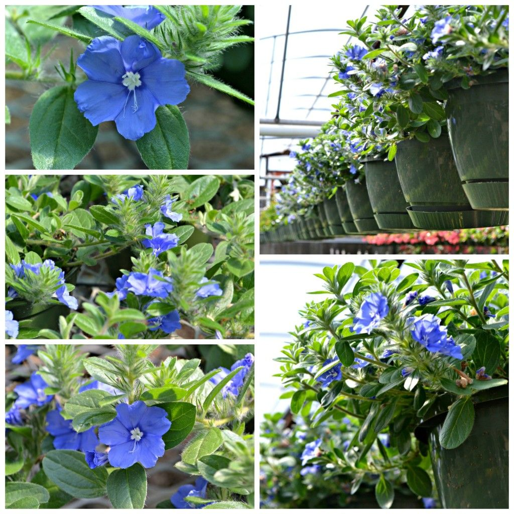 Jo Ann's Top 10 Garden center, Annual flowers, Florida