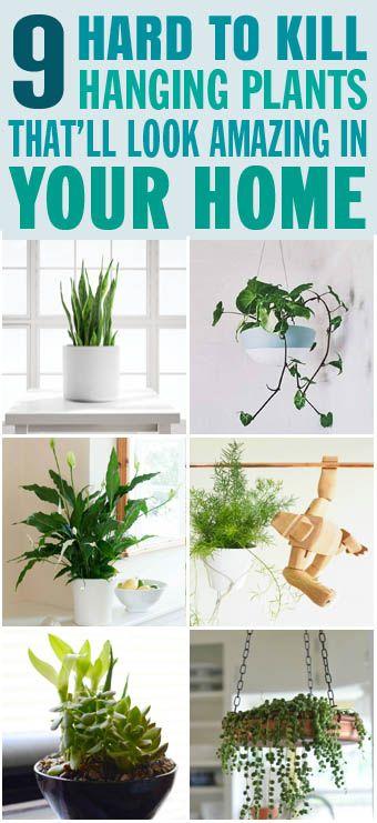 9 Hard To Kill Hanging Plants That'll Look Amazing In Your Home #hangingplantsindoor