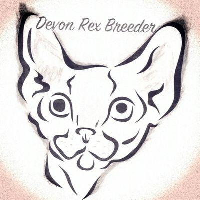 Nursery | Devon Rex | Devon rex, Devon rex kittens, Devon ...