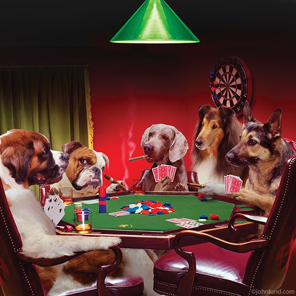 Funny Picture Of Five Dogs Playing Poker Together In A Parody Of C M Coolidge Who Painted A Series Of Such An Dogs Playing Poker Funny Paintings Group Of Dogs