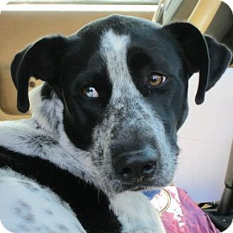Blake Adopted Dog Richmond Va Richmond Va Great Dane