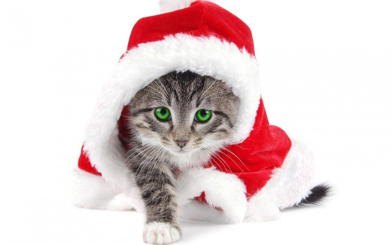 Fonds d\u0027écran de Noël, notre sélection Chats De Noël, Animaux Mignons,