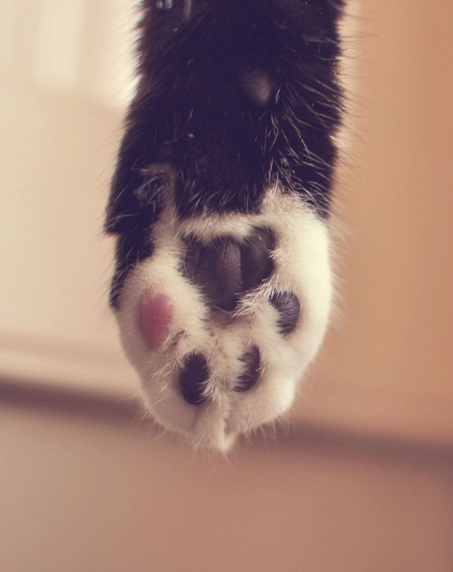 Mittens Mitten Cat Paws Pretty Cats Soft Paws