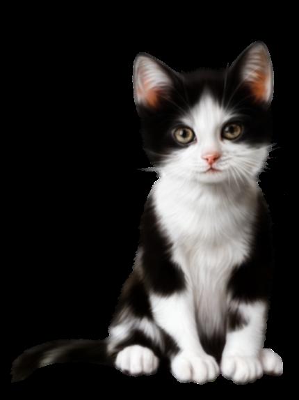 Cute Kitten Transparent Clip Art Kittens Cutest Animals Images Clip Art