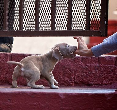 how to discipline a pitbull puppy for biting