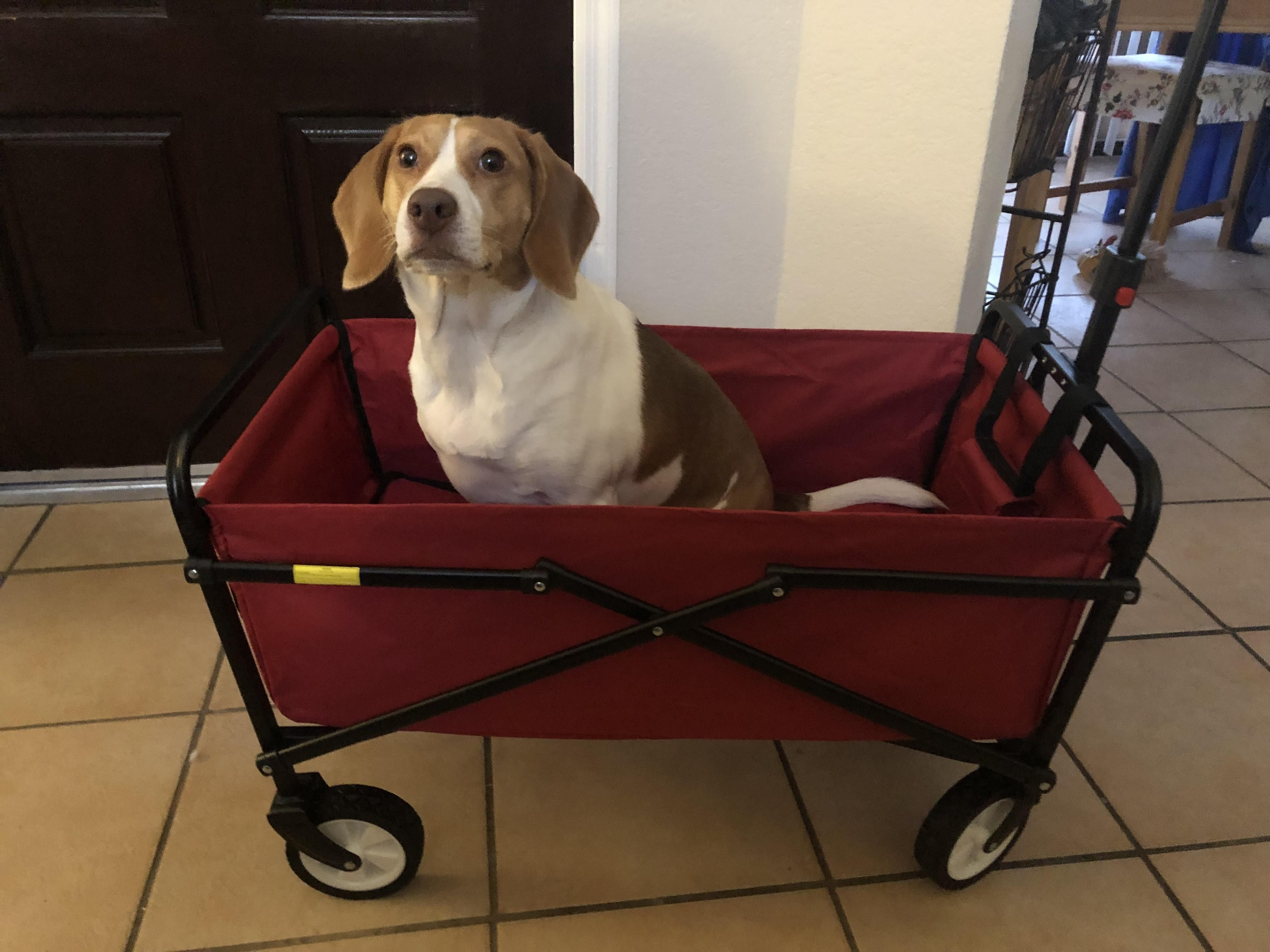 Pin by Rickey Smith on beagles Beagle, Dogs, Baby strollers