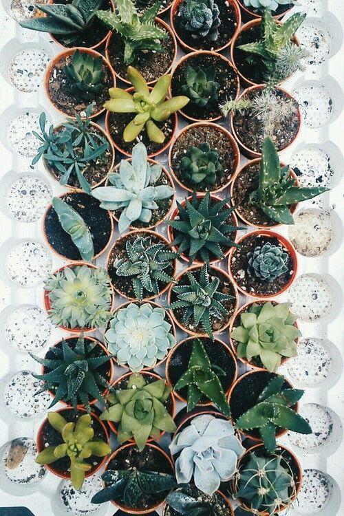 Andiec1 botanical pinterest kaktus pflanzen und for Topfpflanzen pflanzen