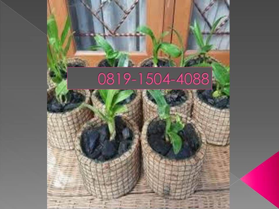 Paling Bagus 0819 1504 4088 Harga Harga Pot Anggrek Gerabah Jogja Decorative Wicker Basket Plants Pot