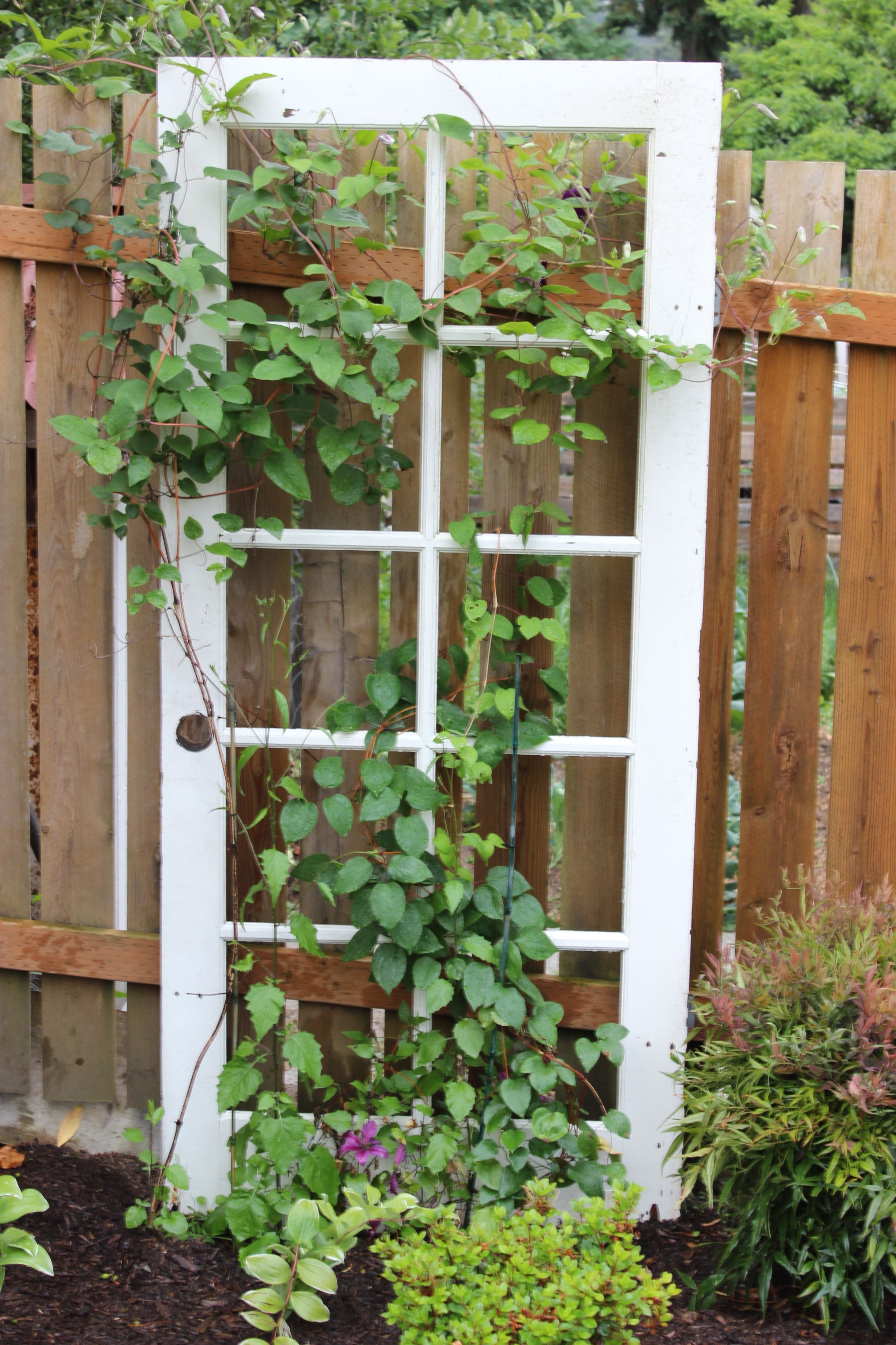 trellis with clematis flowers. Needed 3 doors to make 2 perfect doors for another application. I used the remnant door as a trellis.I absolutely love the repurpose and look of it.