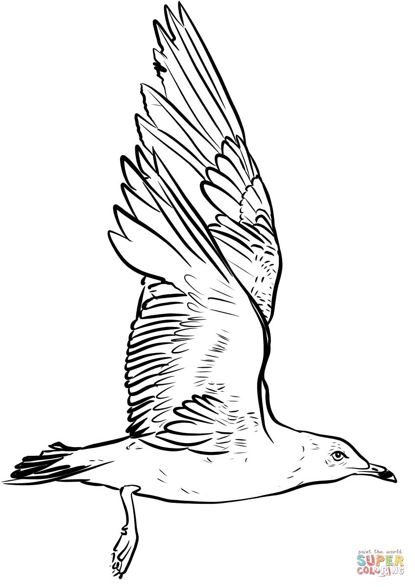 zeemeeuw slaat met vleugels kleurplaat gratis